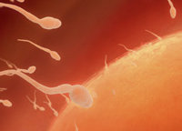 Proteine associate alla fertilità